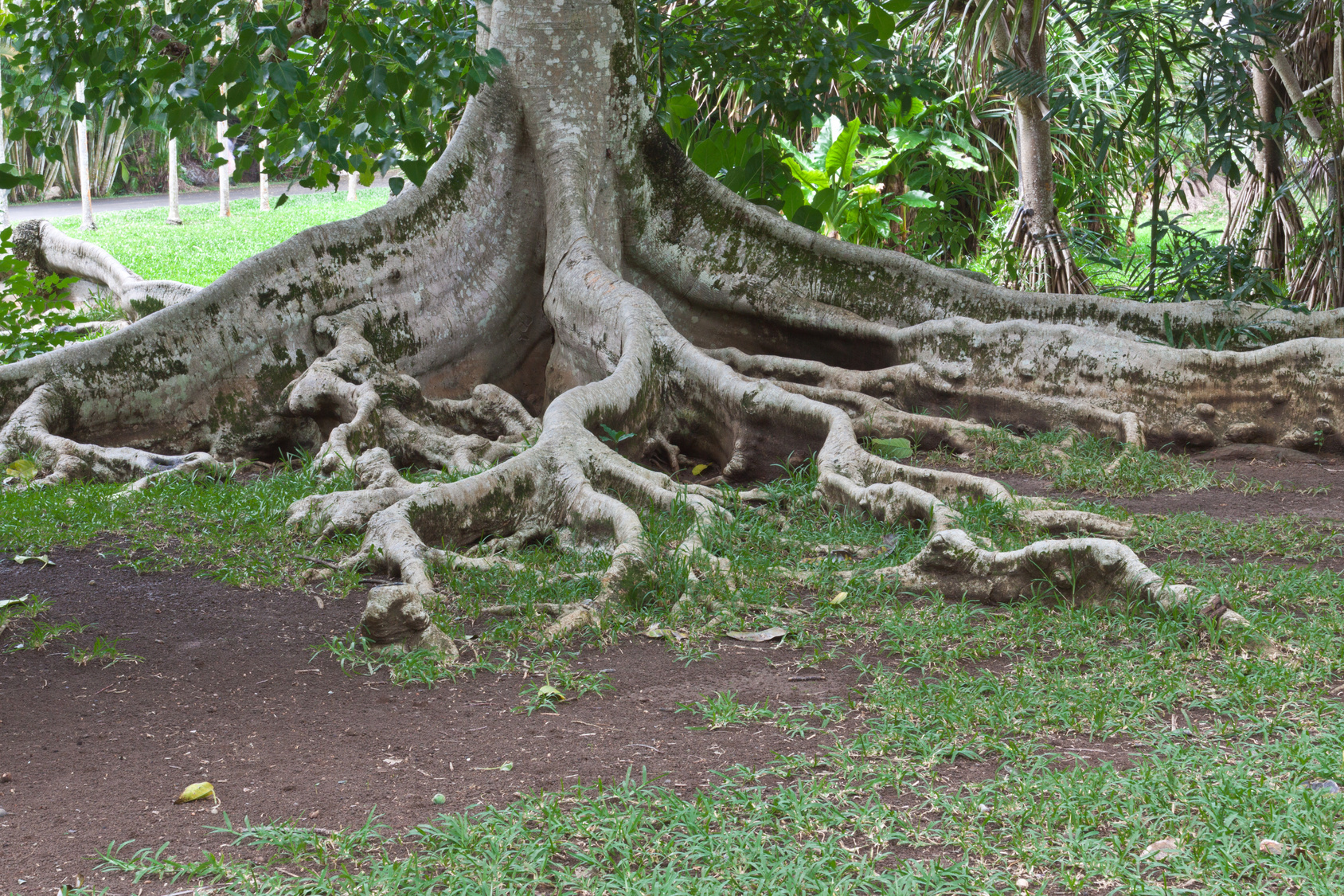 trees in danger In general, the issues that can develop from fallen trees, dangerous trees, or hazardous trees include: the rights of a property owner to remove or trim their neighbor's trees the rights of a property owner to remove or trim their neighbor's tree roots.