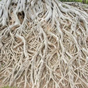 Utah Rooting Services
